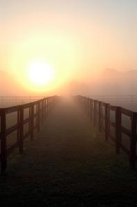 fence&fog&sun