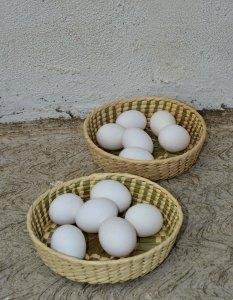 eggsbasketsSmall