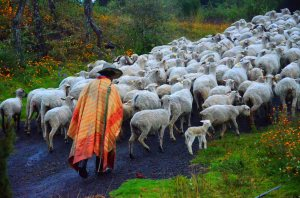 A photo I took directly outside our home here in Mexico of a shepherd taking his flock up the road.